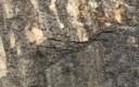 Gams Granite, Austria